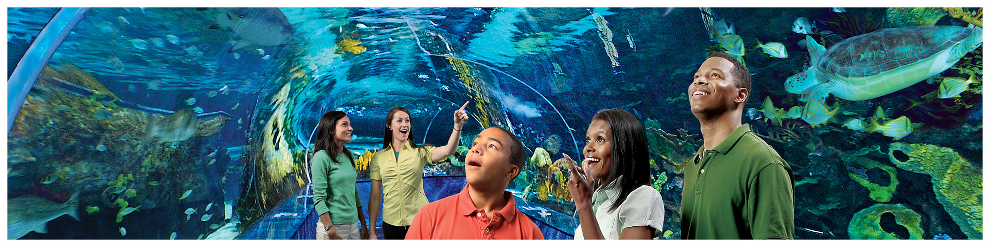 Ripley's Aquarium of the Smokies (Header Background) | Gatlinburg Attractions