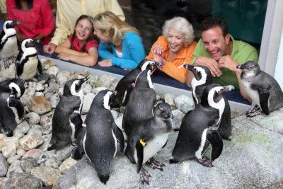 Ripley's Penguin Playhouse (Slider Image 2) | Gatlinburg Attractions