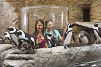 Ripley's Penguin Playhouse (Slider Image 3)   Gatlinburg Attractions