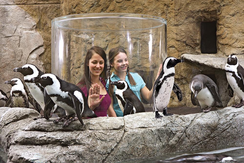 Ripley's Penguin Playhouse (Slider Image 3) | Gatlinburg Attractions