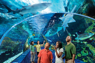 Ripley's Aquarium of the Smokies (Slider Image 2) | Gatlinburg Attractions