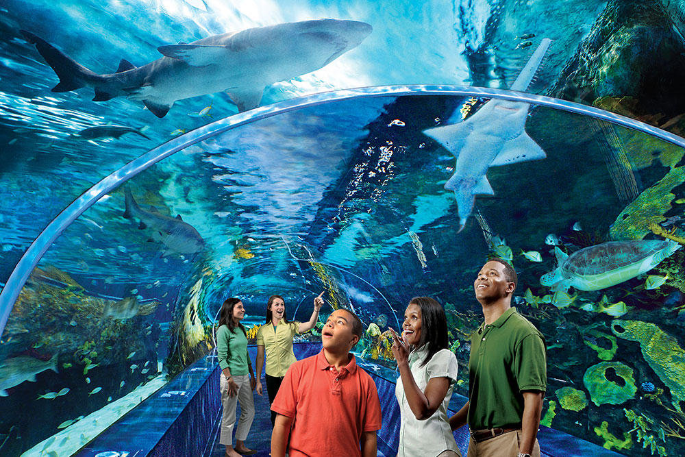 Ripley's Aquarium of the Smokies (Slider Image 2) | Gatlinburg Attractions