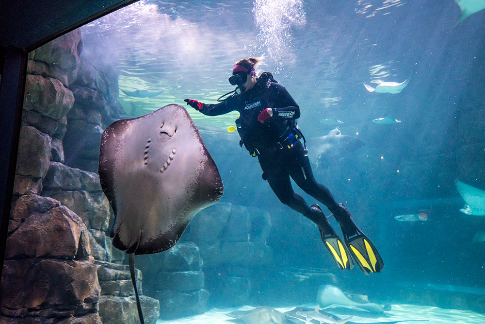 Ripley's Aquarium of the Smokies (Slider Image 4) | Gatlinburg Attractions