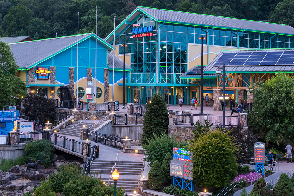 Ripley's Aquarium of the Smokies (Slider Image 5) | Gatlinburg Attractions