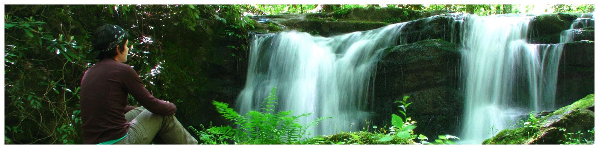 A Walk in the Woods (Header Background) | Gatlinburg Attractions