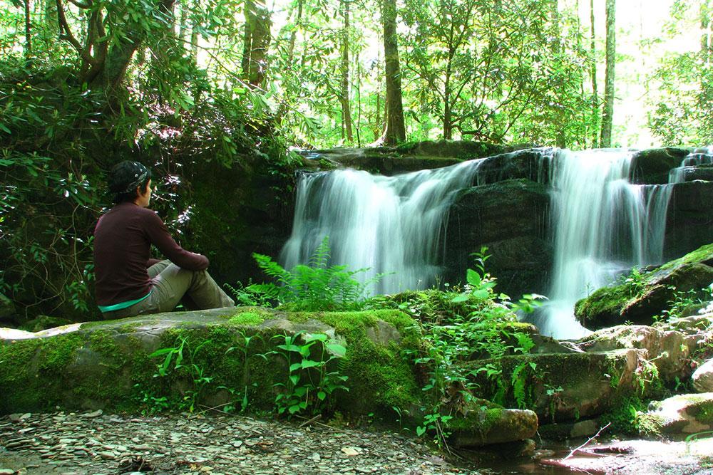 A Walk in the Woods (Slider Image 2) | Gatlinburg Attractions